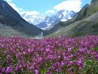 К подножью горы Белуха