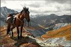 На лошадях к Белухе через Коир