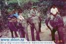 На слоне