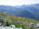 Красота Алтая - цветы