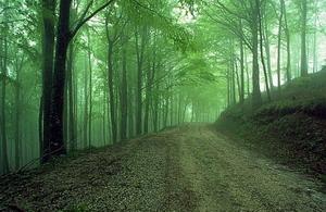 IT_trekking_casentino_wood